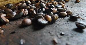 Kopiluak - Caffe