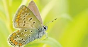 museo delle farfalle